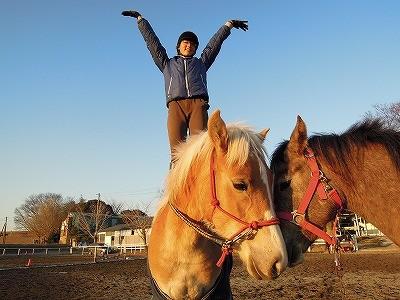 馬の調教と馴致