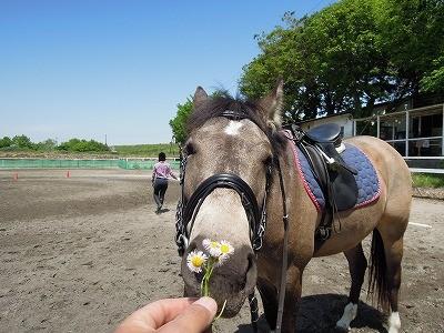 おねだり馬の可愛いお顔