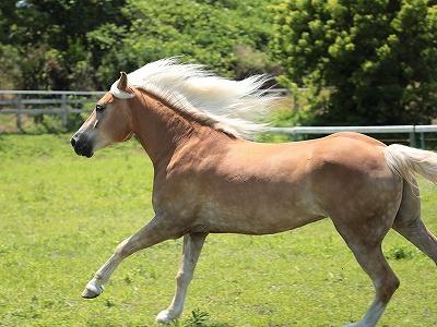 馬を幸せに保つ