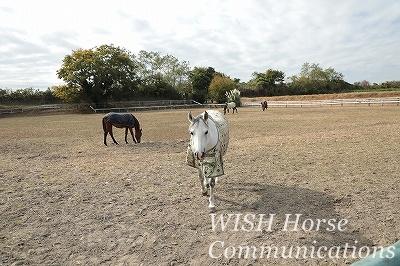 馬とパートナーシップ