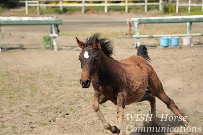 馬を尊重する乗馬