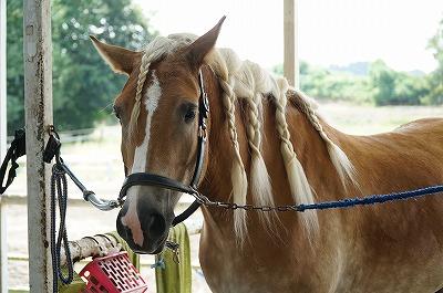 愛され乗馬をしよう。どうすれば馬に愛されるか考えよう