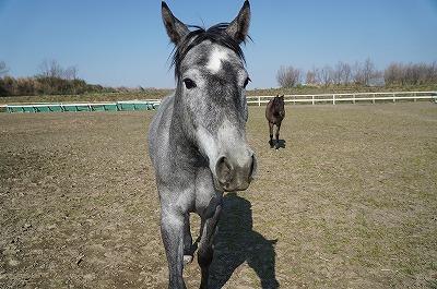 馬も学習している