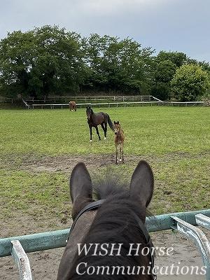 乗馬の父と子