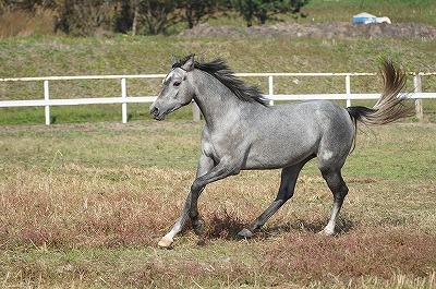 ウェルフェアを守られた美しい馬