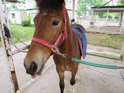 新馬調教 馬のOKサイン