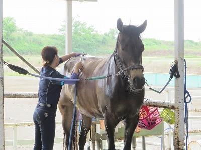 馬が気持ちいいときの顔