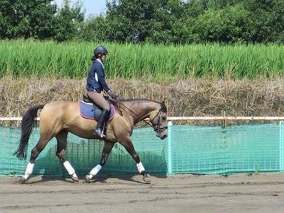乗馬 トップラインの伸展