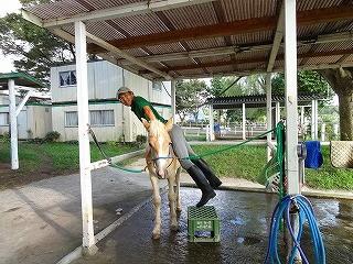 馬と遊ぶ馬と仲良しになる
