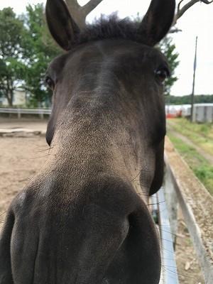馬と仲良し