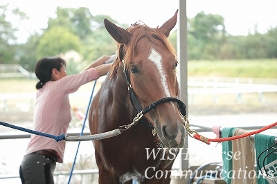 表情豊かな乗馬