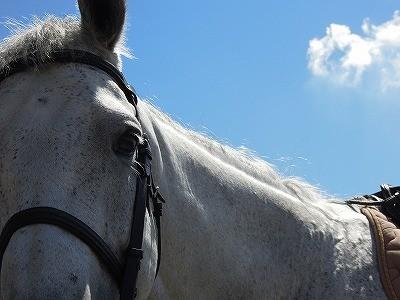 青い空、白い雲、白い馬