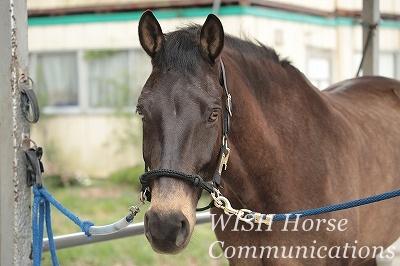 馬と見つめ合う