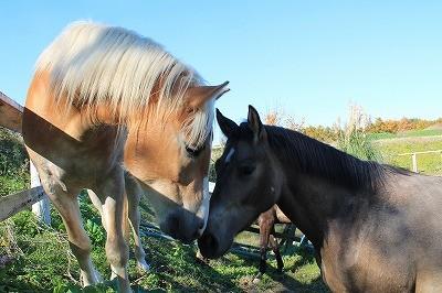 太陽の乗馬クラブ