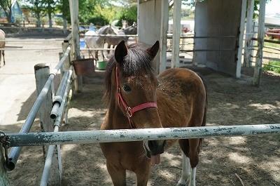 新馬調教 放牧は大切