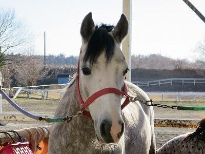 馬と話せるようになってみませんか