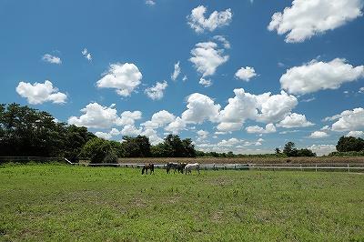 馬達ののんびり風景