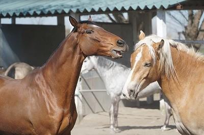 馬達の自然な姿