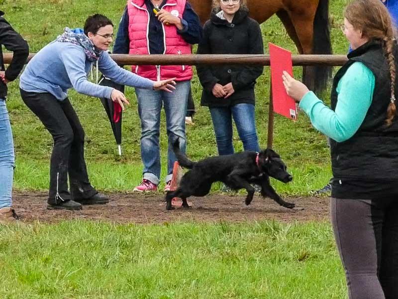 100 Punkte für die Islandpferdefreunde gab es durch die tolle Unterstützung von Crna, die im Hunderennen gewann.