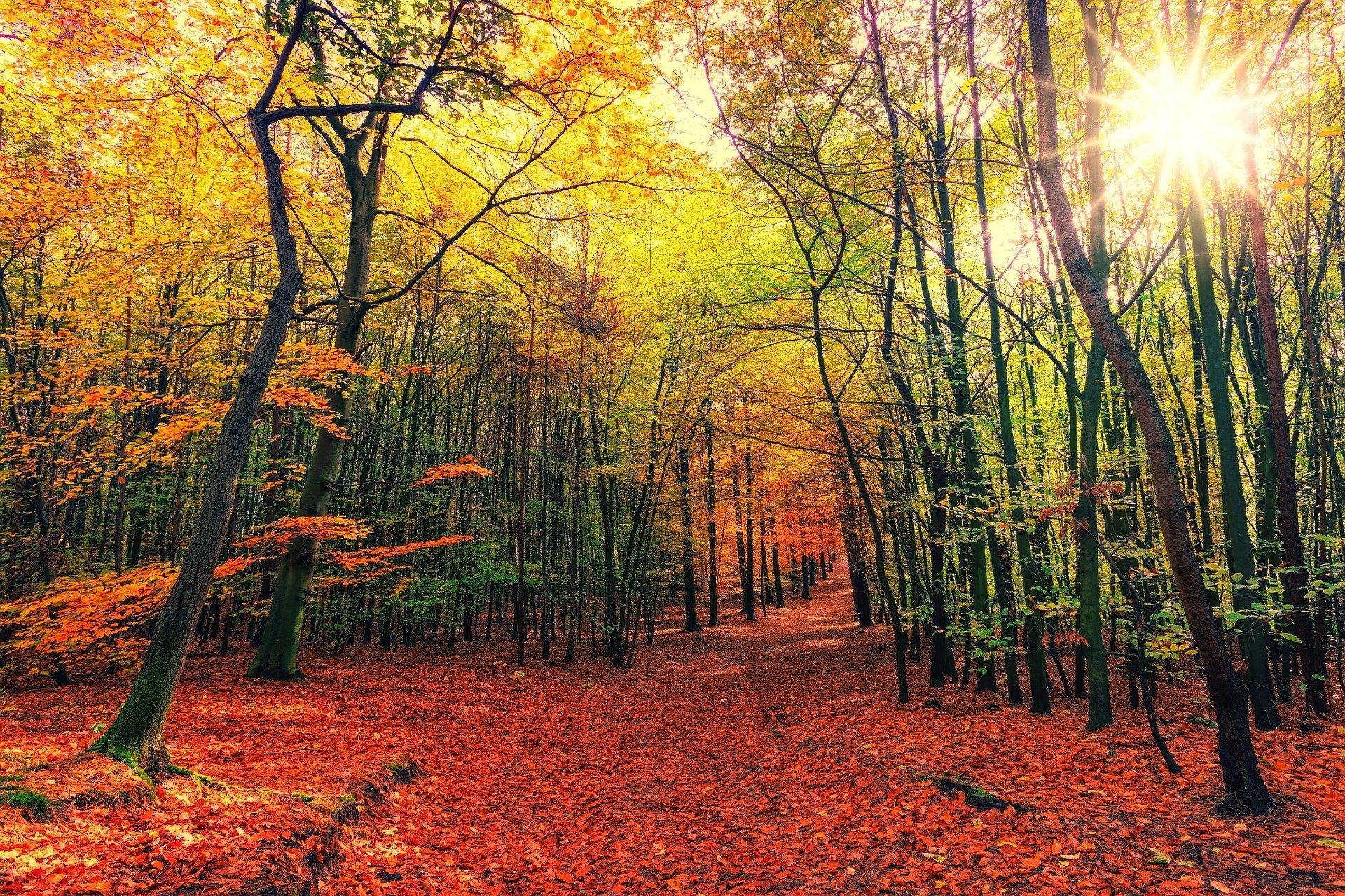 Wie du im Herbst in deinem Gleichgewicht bleibst