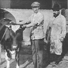 Los hebreos solo pueden comer la carne de las reses que hayan sido degolladas con arreglo a un ritual. Cada día el rabino Kimstlinger acude al matadero para elegir las que han de ser sacrificadas.