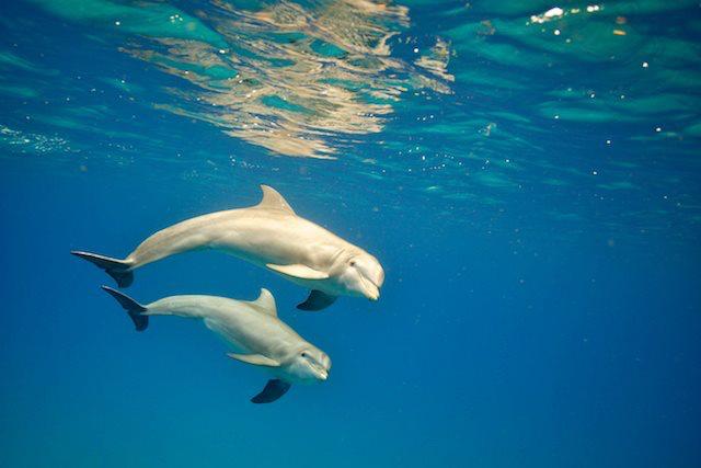 Schwimmen mit Delfinen-Wow
