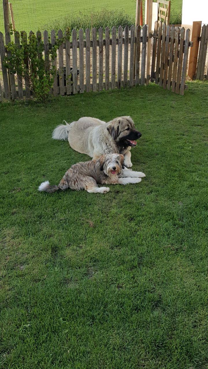 ..wer sagt, dass Kaukasen unverträglich seien ? Von coolen Hunden lernt man cool sein ;-)