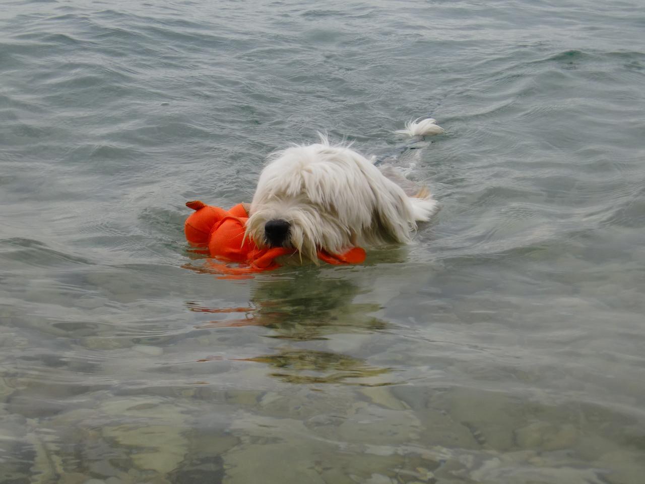 Oskar erobert den Gardasee ;-)