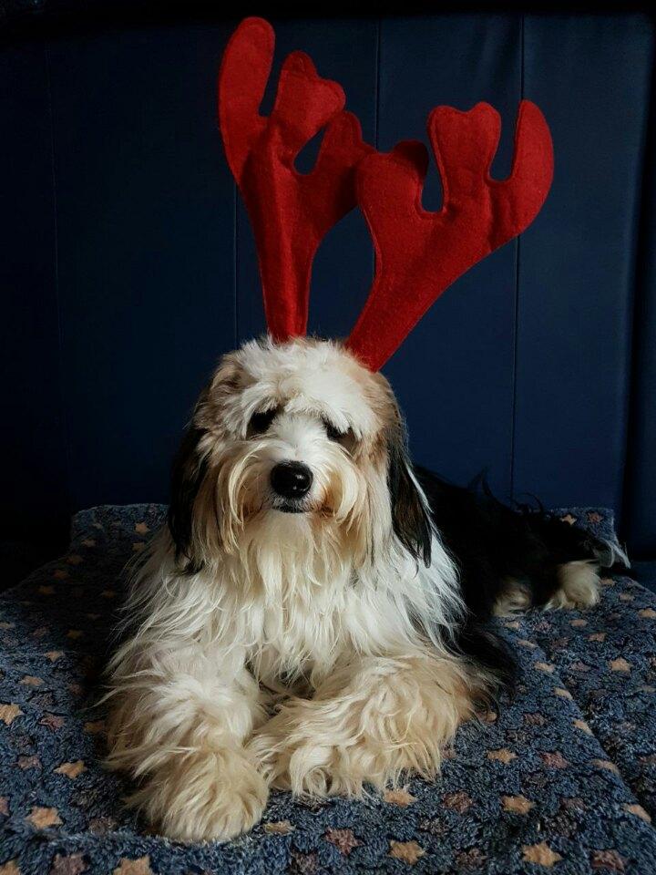 Sein erstes Weihnachten :-)