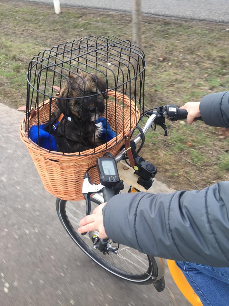 Emil fährt sogar schon Fahrrad, bravo !!!