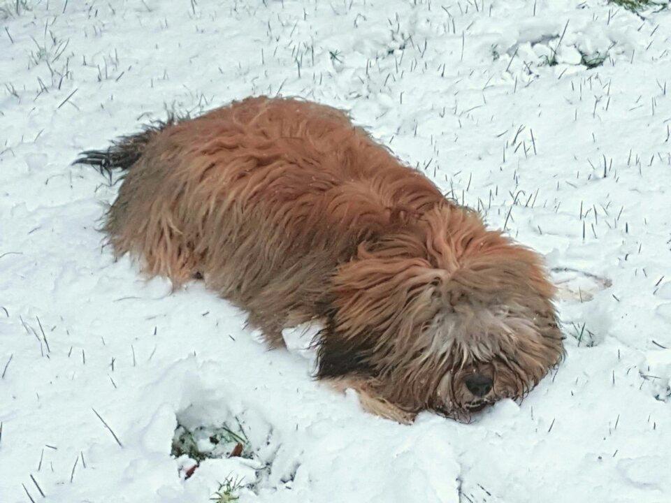 Der erste Schnee, auch für Chico ein toller Spaß