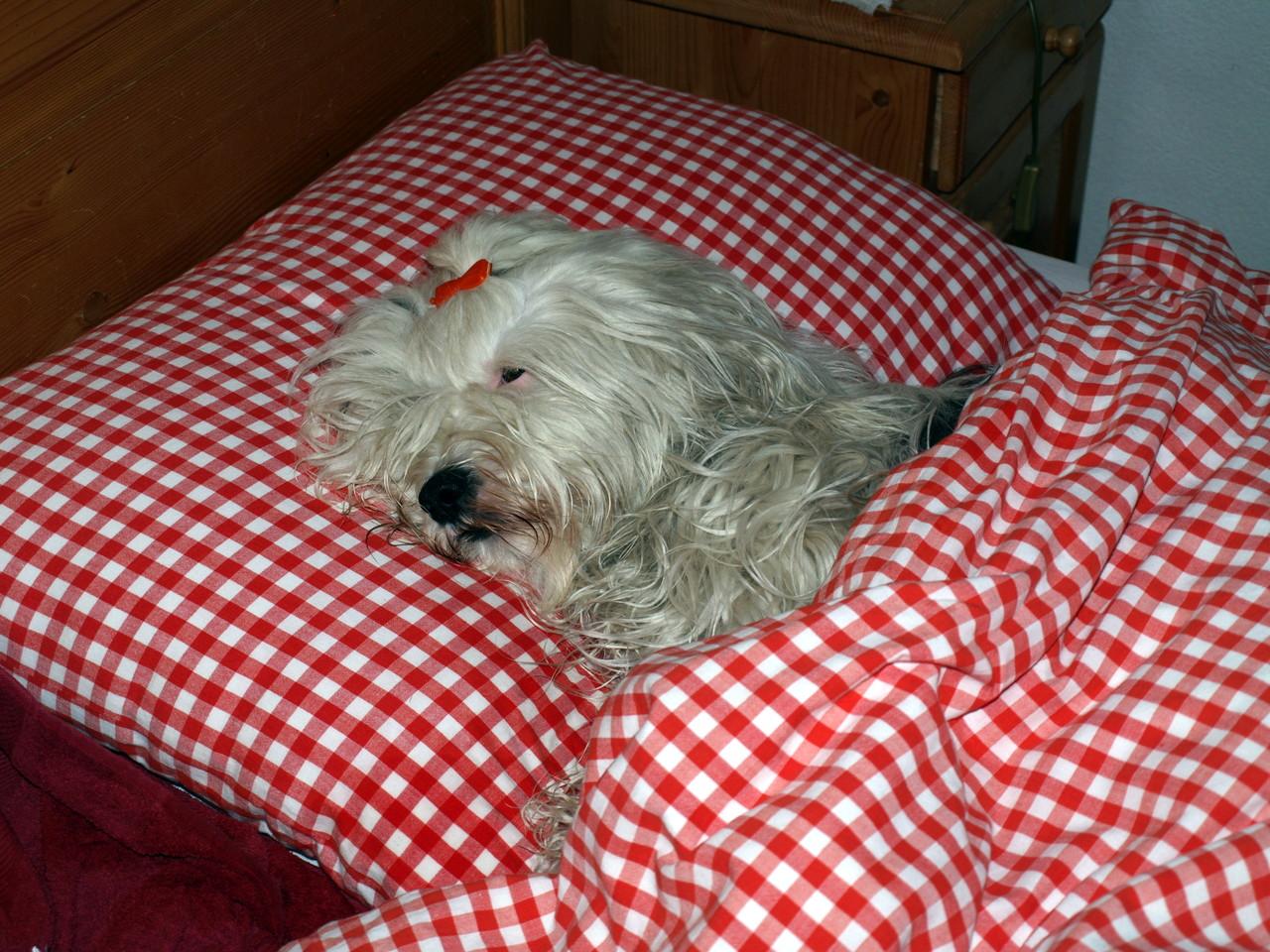 klar, dass sie auch ihr eigenes Bett beansprucht...