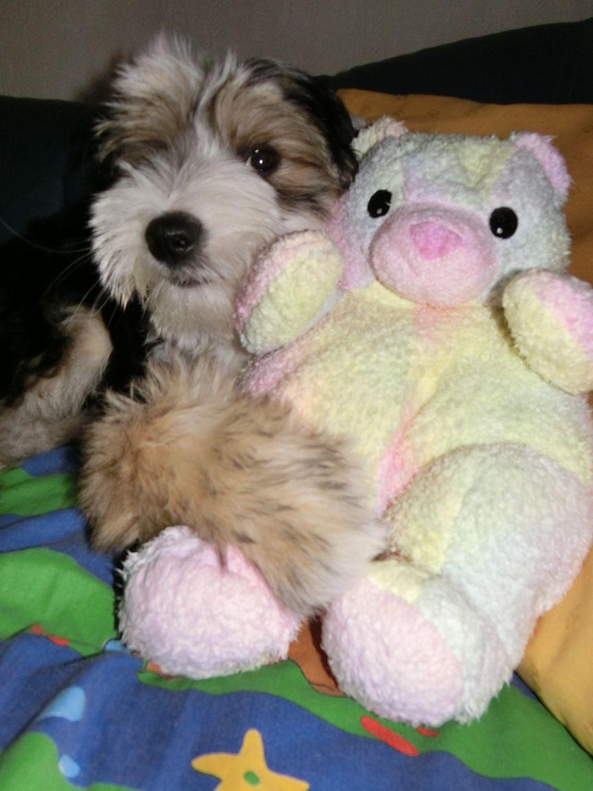 Tashy, pass gut auf deinen Teddy auf ! Wie stolz er schaut..