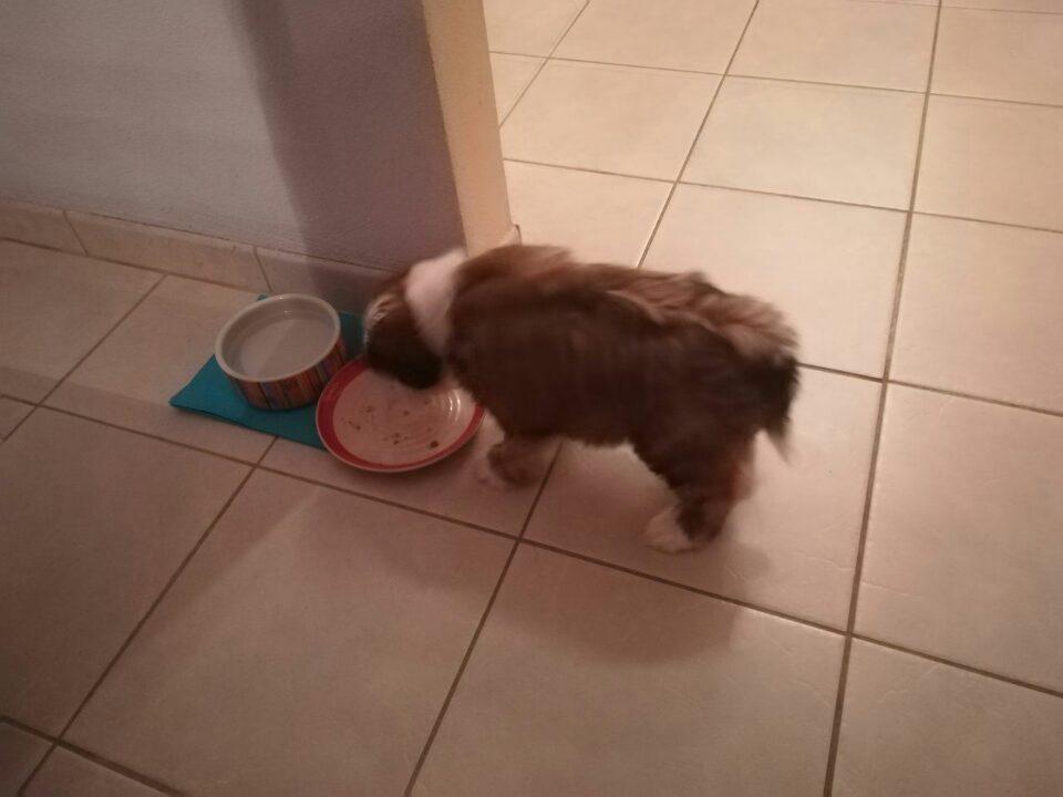 Rani wie ausgehungert bei der Ankunft