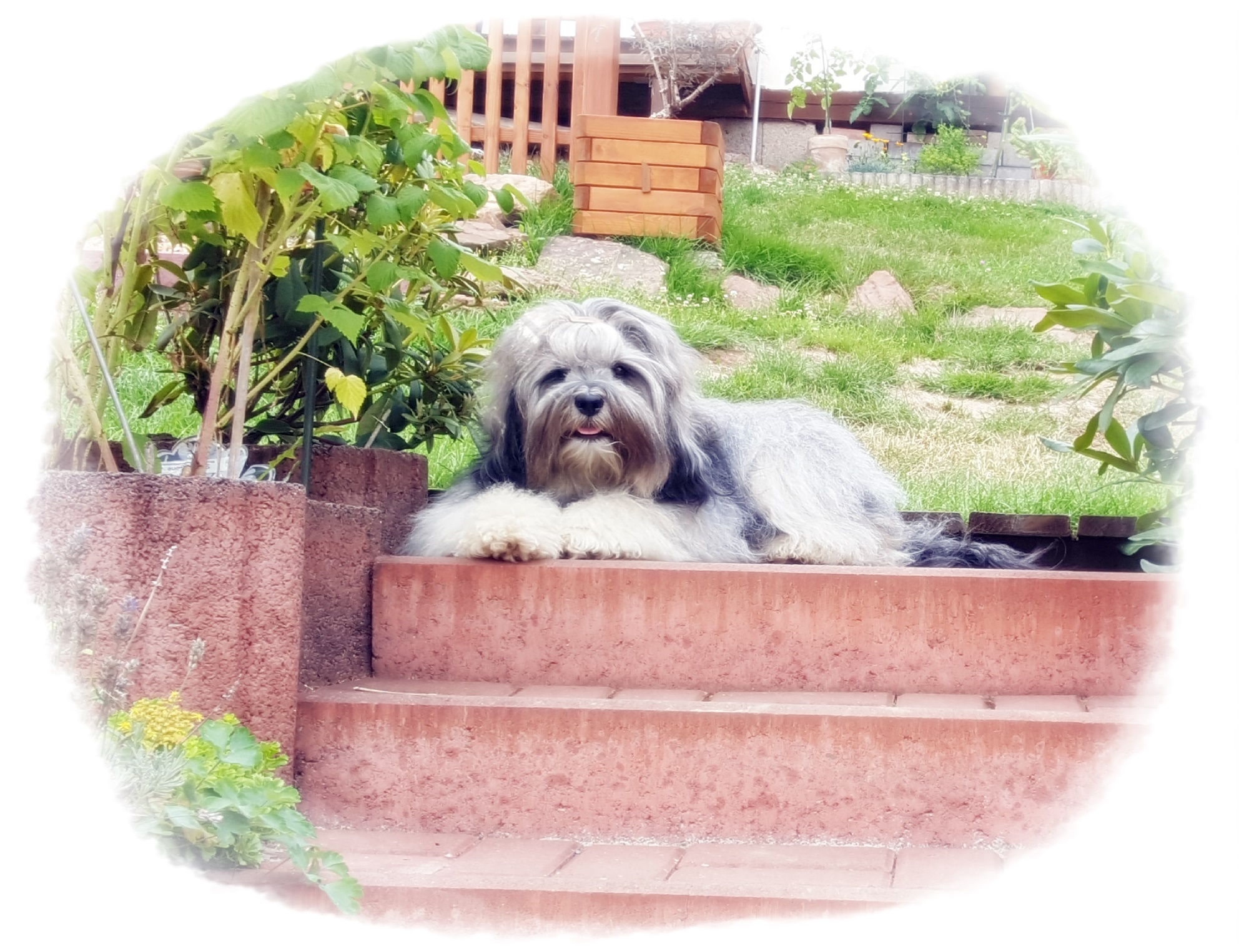 unsere Tempelwächterin trohnt auf ihrem Lieblingsplatz :-) Sie könnte draußen leben..