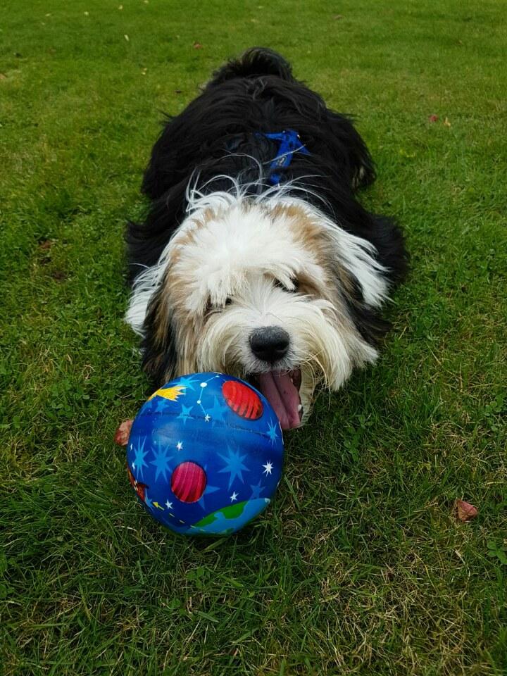 Tashy ganz stolz mit seinem neuen Ball
