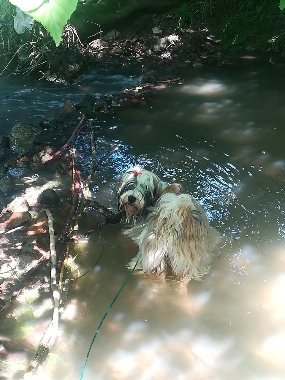 sie liebt Wasser, wie die Mama!