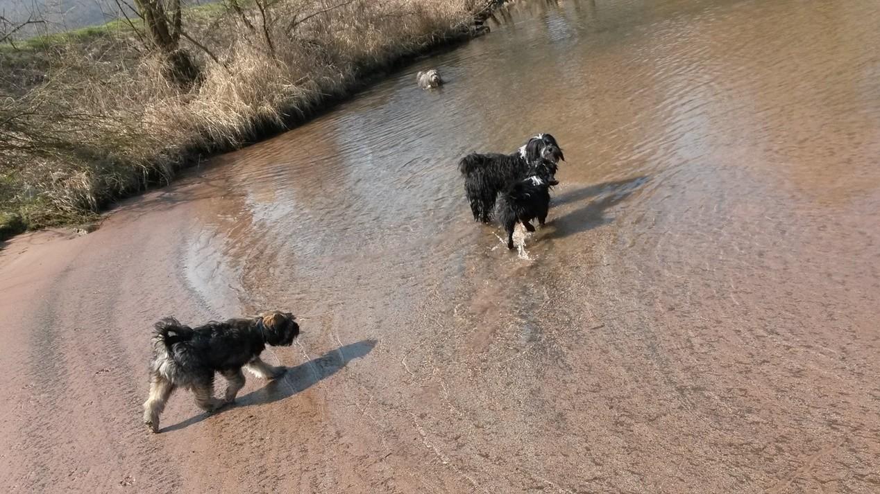 die Hunde lieben es an der Bucht zu spielen