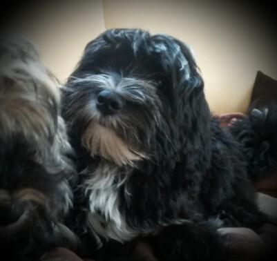 unser Wachhund Milow