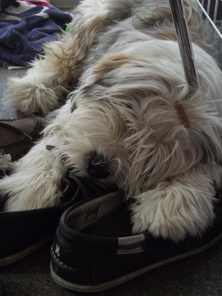 Teddybär Bandhu im Urlaub