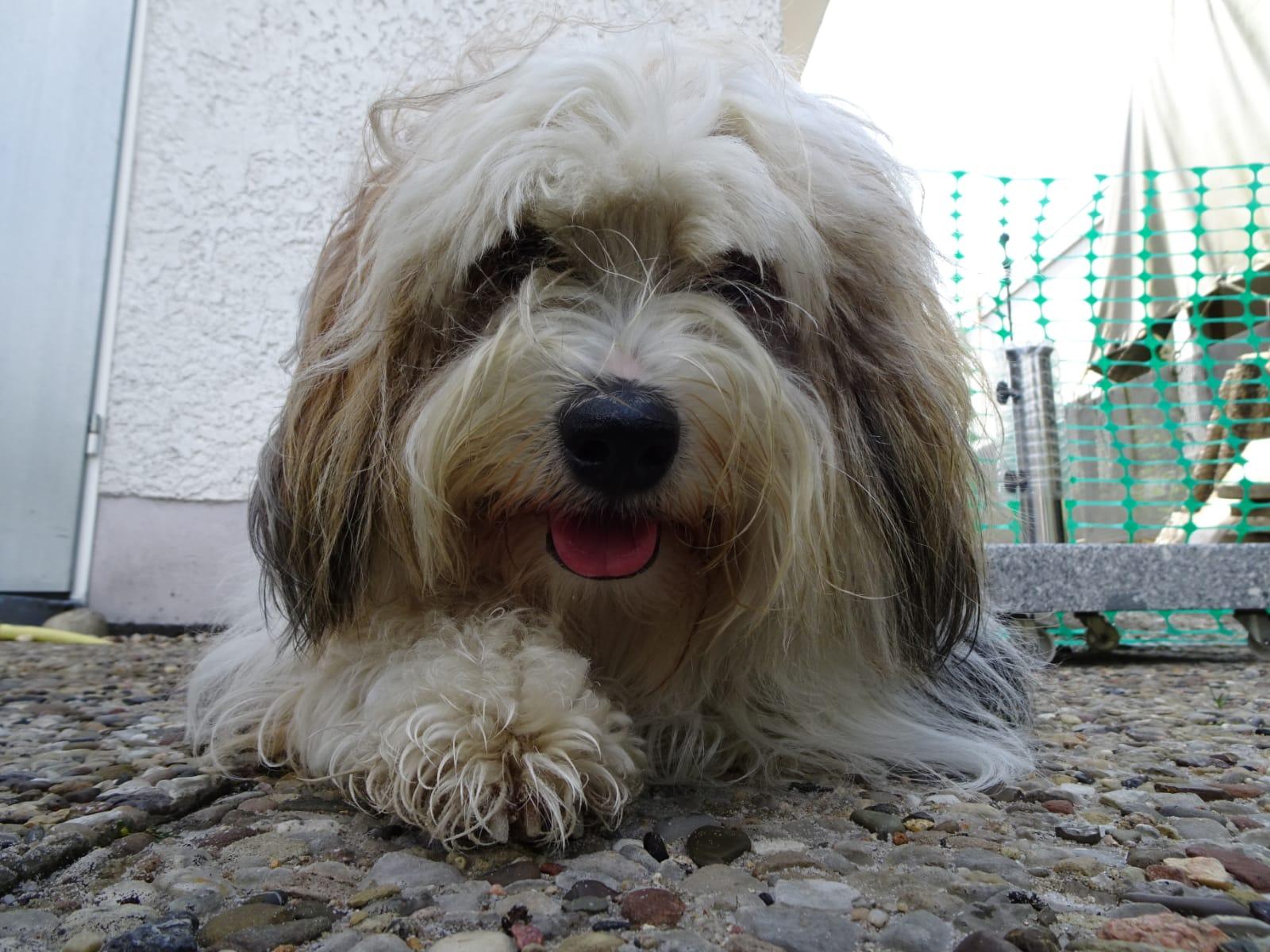 Tashy ist nun nicht mehr alleine, glücklicher Hund noch glücklicher :-)