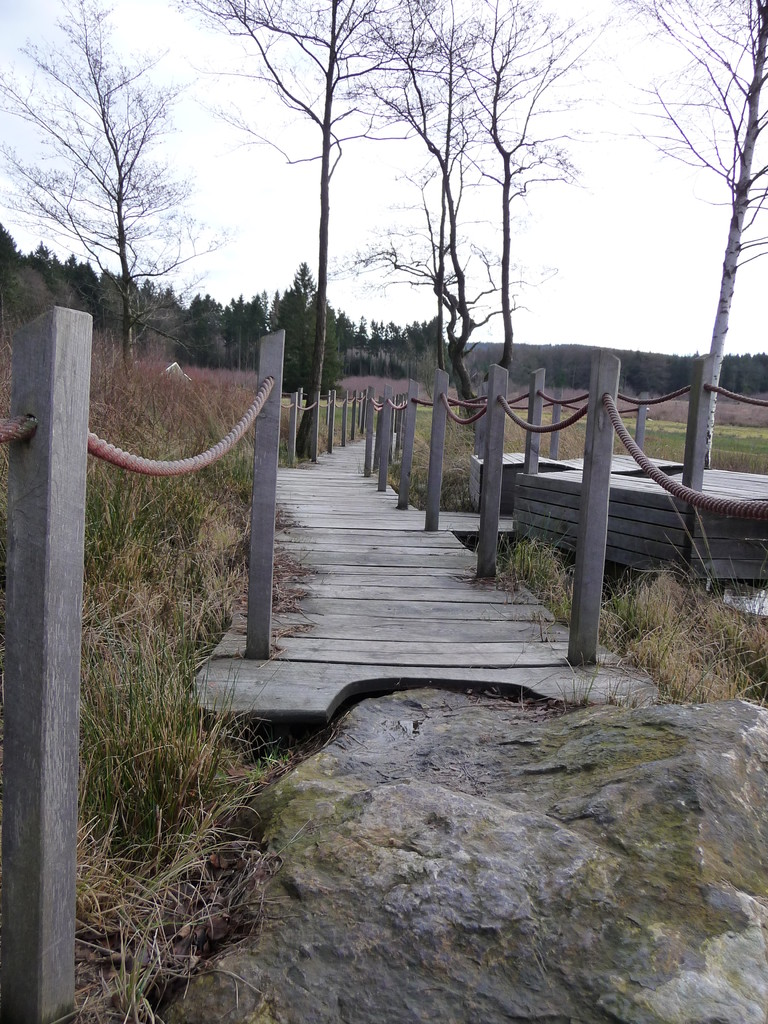 über Stege geht es durch das Quellmoor zur Burgruine Baldenau