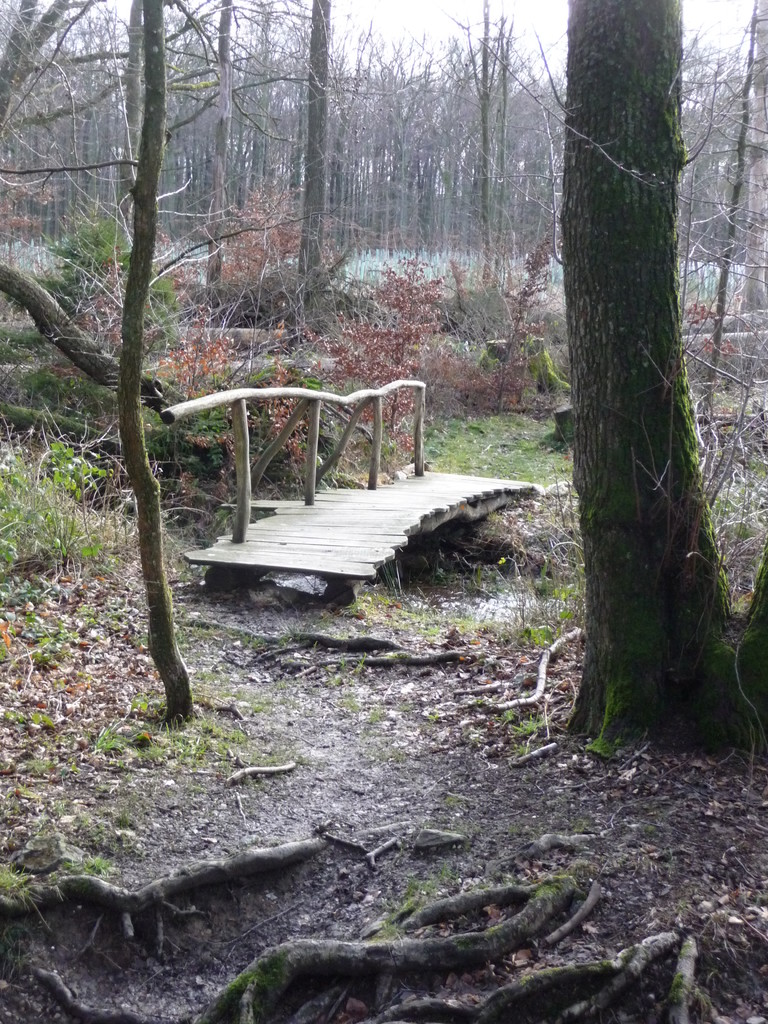 Pfad durch den Wald zu einer weiteren Wiesenfläche