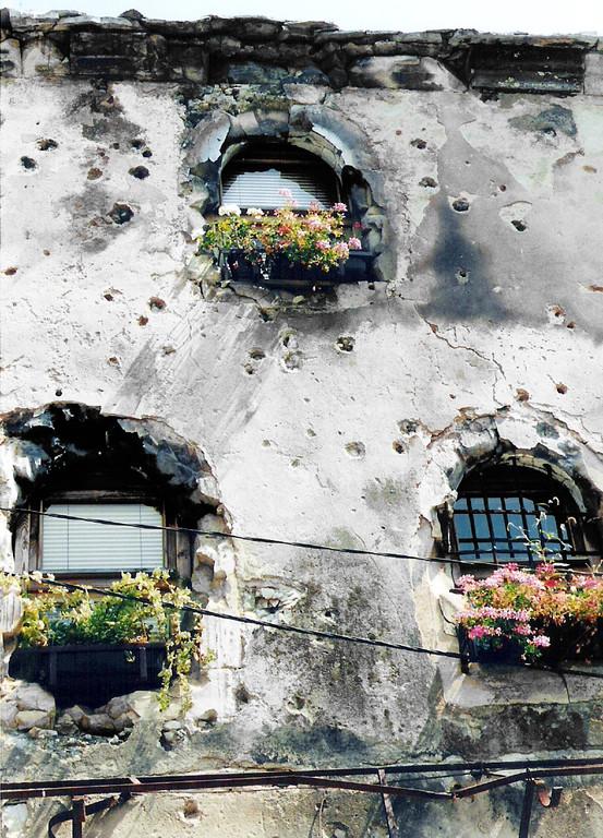 nach Ende des Krieges die ersten Blumen