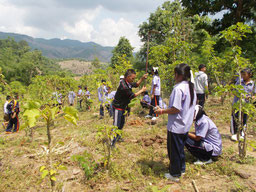 Tree planting in Thailand