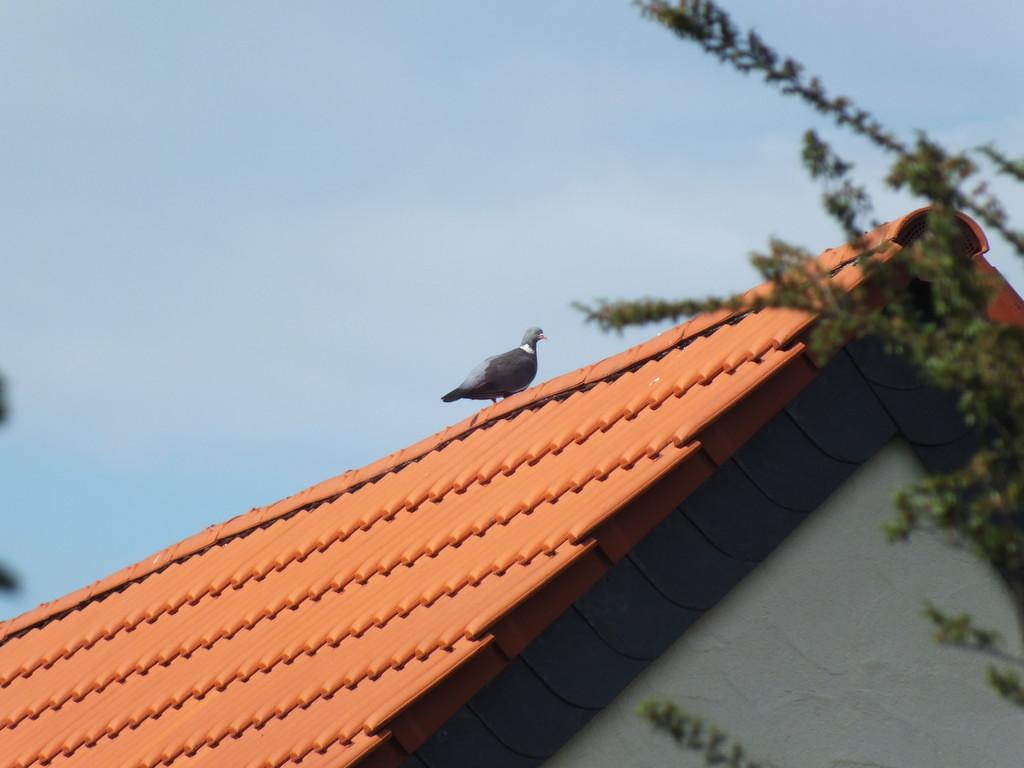 ie war das mit dem Spatz in der Hand und der Taube auf dem Dach ?