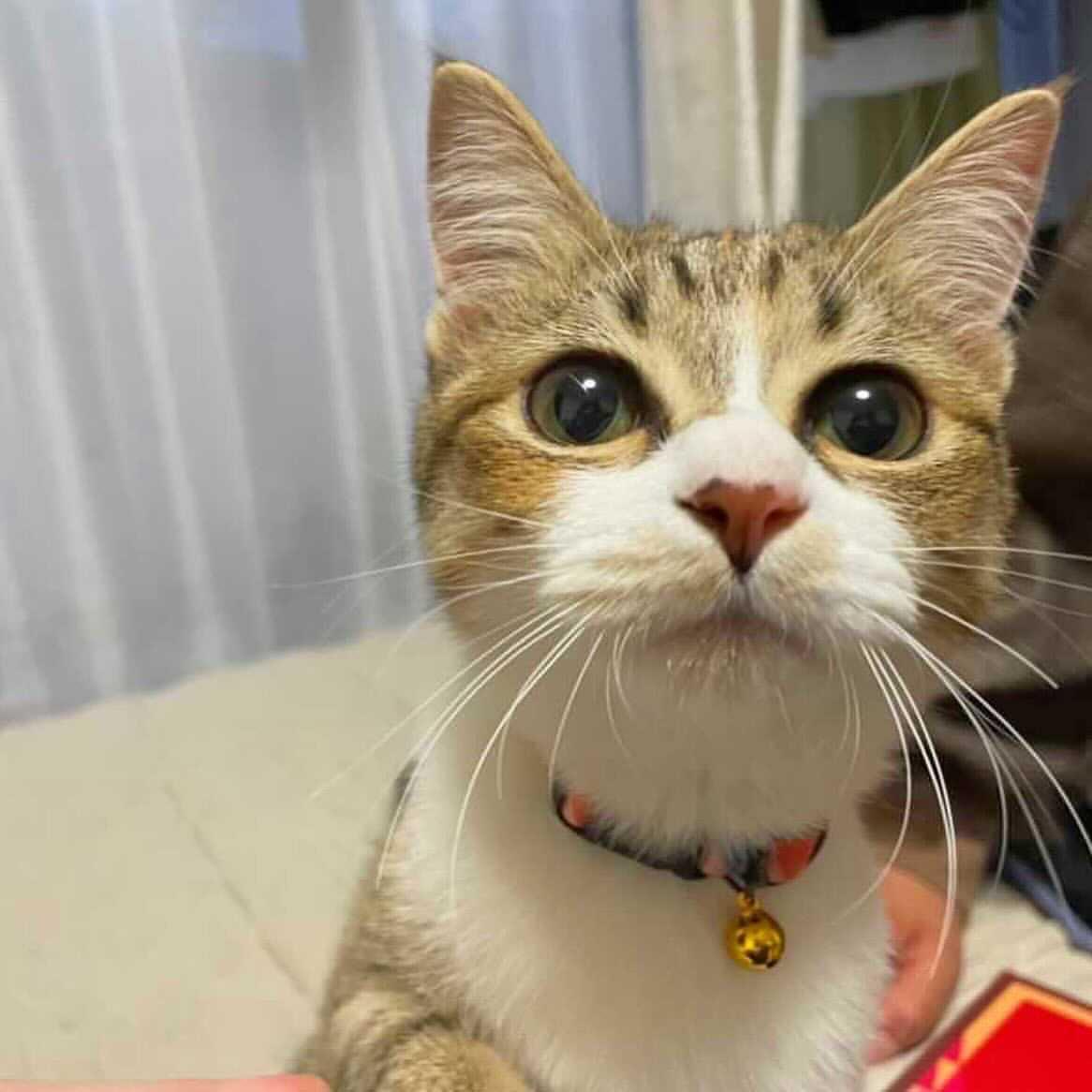 海/日本猫キジシロ