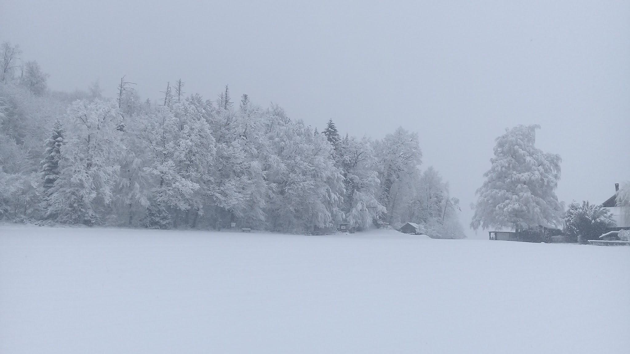 Verschneiter Hartlisberger Wald