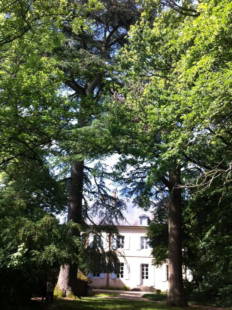 Nohant, maison de Georges Sand : les 2 cèdres plantés par Georges Sand pour la naissance des enfants