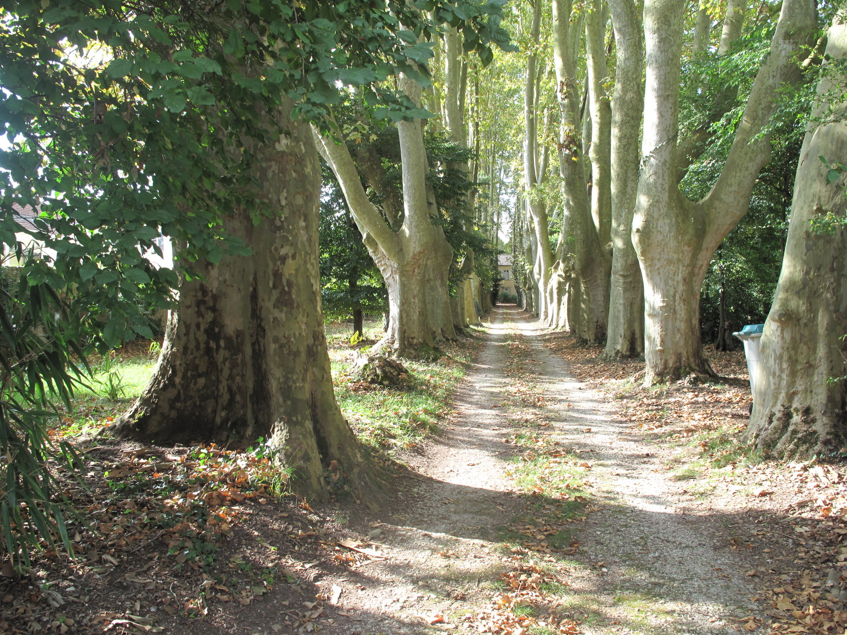 Villeneuve-sur-Lot : l'allée de la villa La Solitude